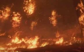 森林防火公益宣传片