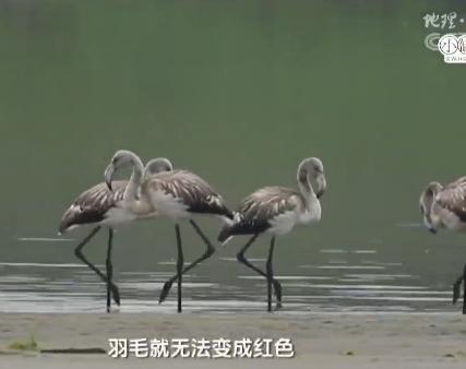 《地理中国》 20190305 神奇的脚印
