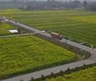 四川成都:万亩油菜花怒放 特色农产品成亮点