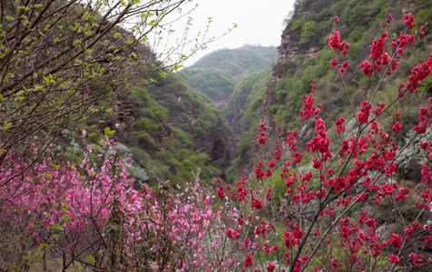 河北邢台:九龙峡春色