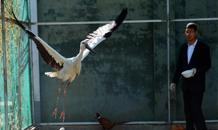 河北沧州:救助迁徙候鸟