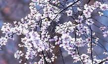 石家庄的春天原来就在家门口