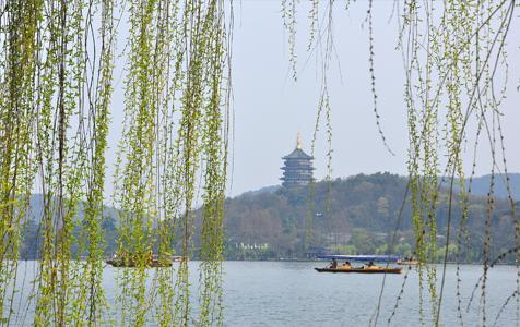 杭州:西湖杨柳依依春意浓浓景色迷人