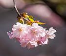 春暖花开 正是赏花好时节