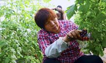 河北威县:春分将至 春耕春管农事忙