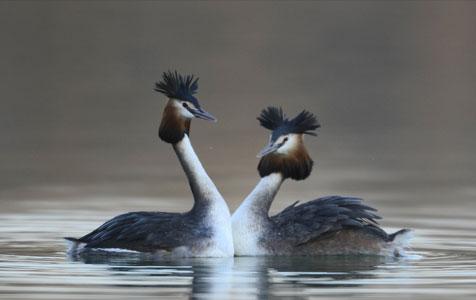 河北唐山:南湖野鸟舞翩翩