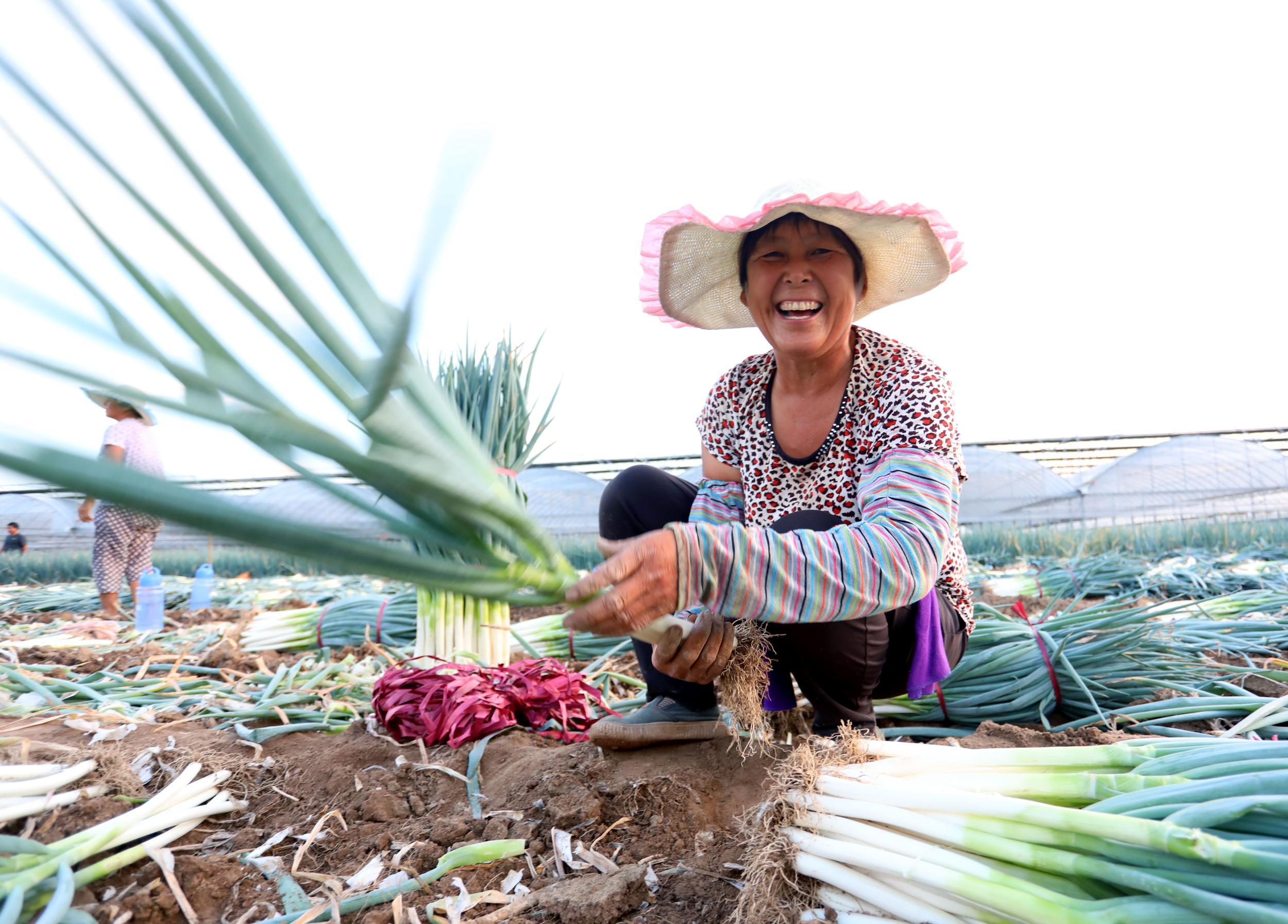 一号文件聚焦乡村振兴 推动实现农业强农村美农民富