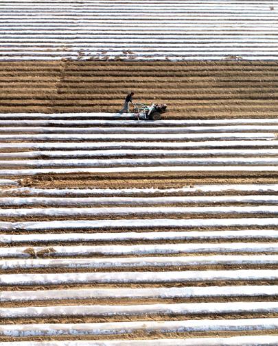 丰润:春耕春管在乡间