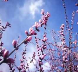 今日春分!又是一年花开时,走近百花深处的醉美唐山……