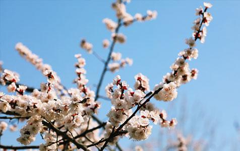 【高清组图】春游衡水湖,一池春水美如画