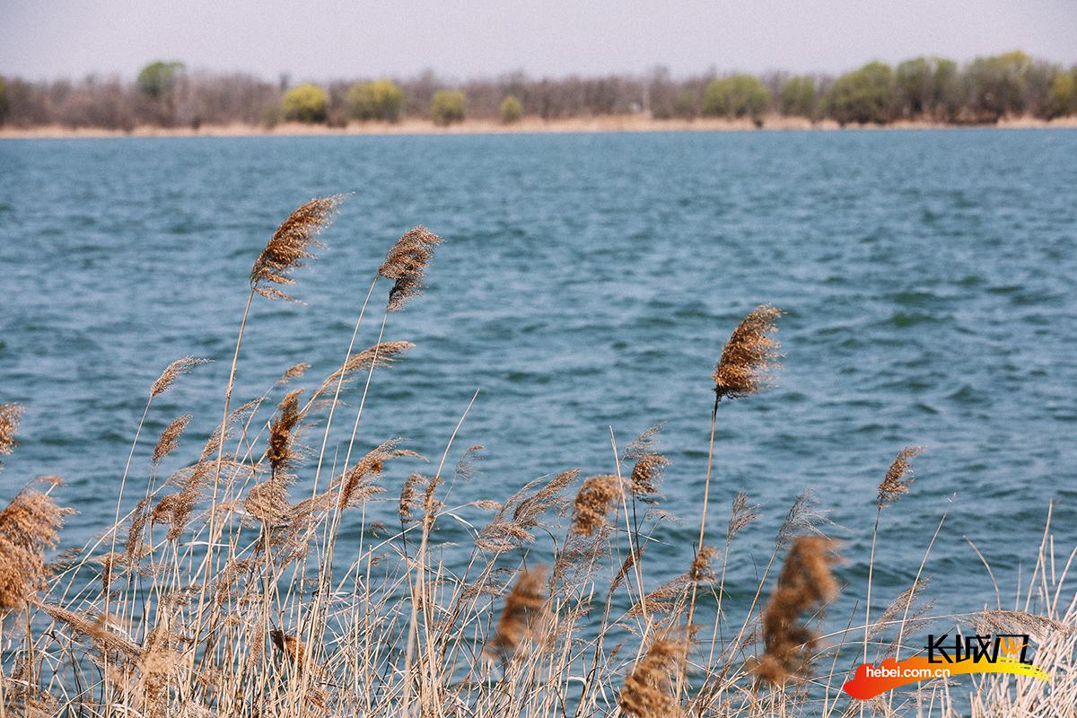 【视频】我和春天有个约会——长城新媒体记者带您邂逅秀丽衡水湖