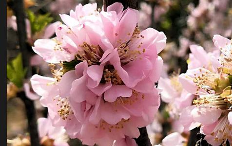 风皱池水 春落枝头 春暖花开的季节和小编一起出去走走