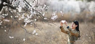 河北內丘:春分時節享春光