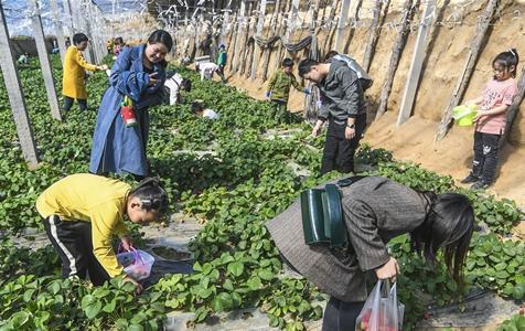 """河北广阳:""""农业旅游""""引客来"""
