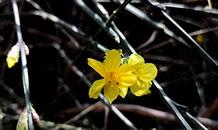 风皱池水 春落枝头 春暖花开