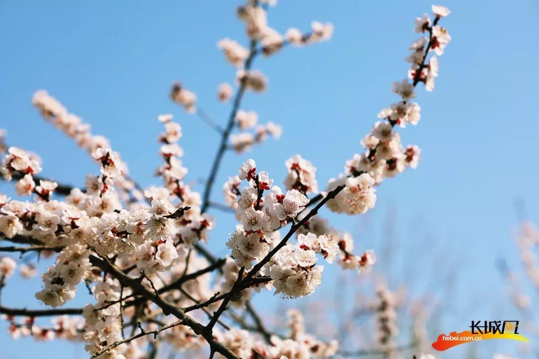 三月春风和煦时,我们一起去衡水湖踏青吧!