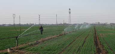 河北:春播粮食作物增加72.5万亩