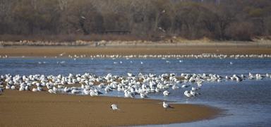 快来看!北戴河观鸟湿地群鸟翔集