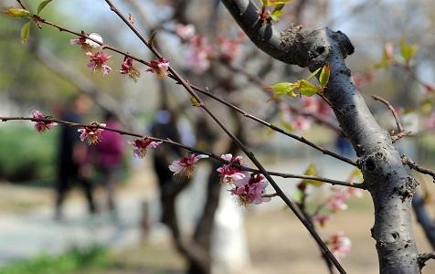 北京?#22909;?#22478;墙遗址公园鲜花盛开春色美