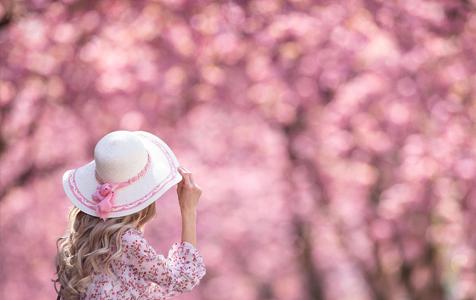 德国波恩樱花盛开 繁花朵朵春意盎然