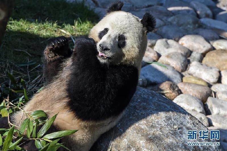 丹麦女王为哥本哈根动物园熊猫馆揭幕-新闻频道-长城网