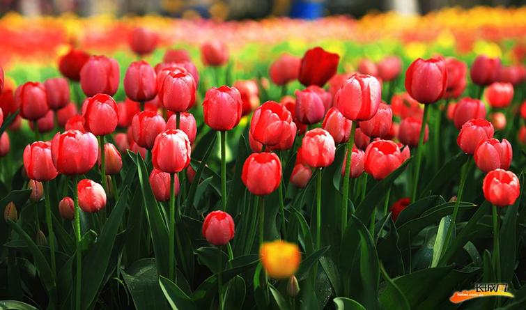 【微视频】春风十里,只差一个赏花的你