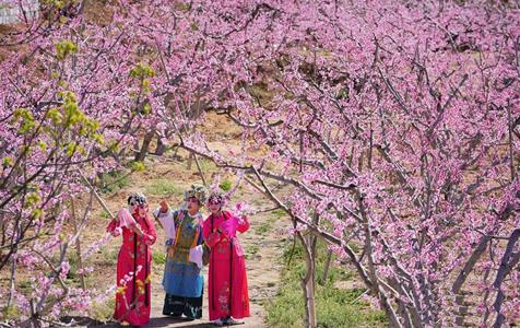 河北丰润:乐享桃花节