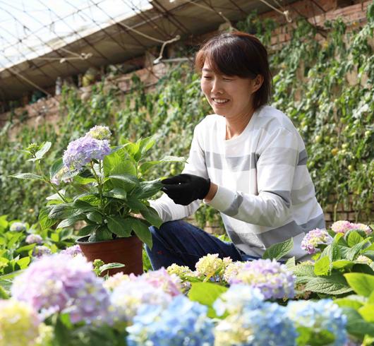 农家女养花走上致富路