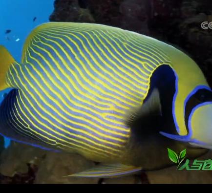 《人与自然》 20190417 珊瑚礁——水下城郭