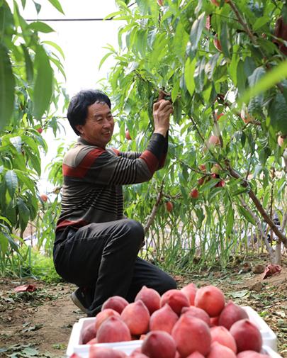 丰润:设施农业助农增收