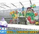 """魅力世园会 :""""三百园""""之百蔬园 展现蔬菜发展史"""