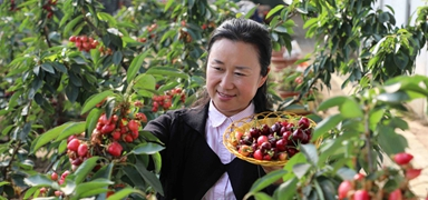 丰润:设施农业助力乡村振兴