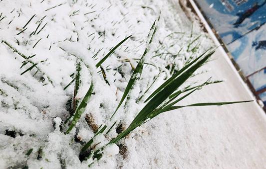 """快看 """"雪国""""崇礼又下雪了"""
