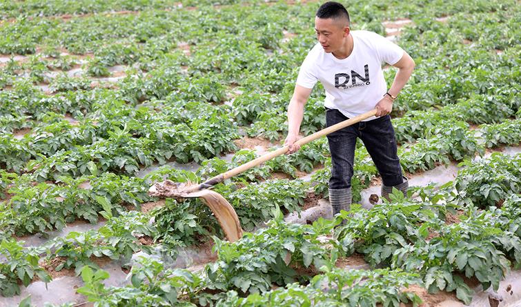 唐山丰润:立夏时节农事忙