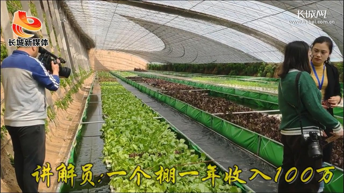 【视频】农业高质量发展:鱼菜共生 一个大棚年产值可达100万元