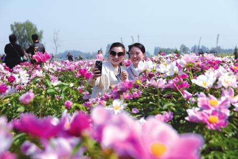 魏县打造集特色农旅融合产业集群