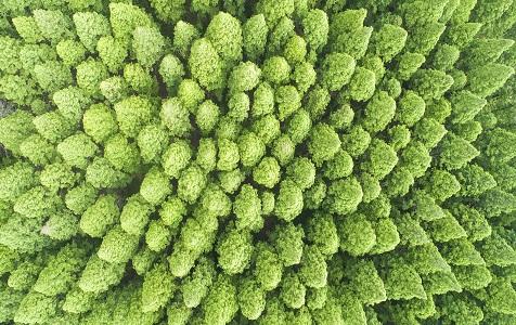 江苏宿迁:湿地生态杉林景色美