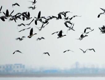衡水湖之变②|鸟的天堂