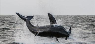 美国长岛海峡附近发现约3米长大白鲨 系史上首次