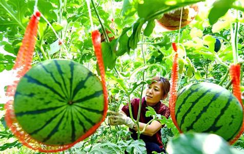 河北乐亭:农业园区建设助推乡村振兴