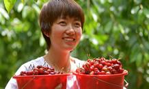 迁安:发展果品产业助力乡村振兴