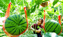 乐亭:农业园区建设助推乡村振兴