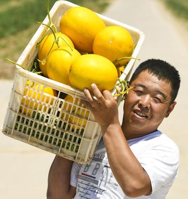 衡水:甜瓜飘香富农家