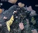 """900米深海底现""""海底花园"""" 中国""""科学""""号科考船传来深海美照"""