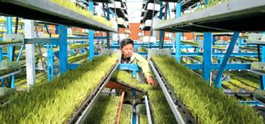 """干農活正在變得更""""聰明"""" 智慧農業效率高 質量好"""