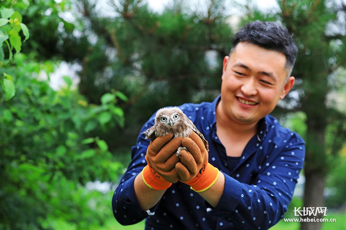 河北滦南:成功救助纵纹腹小鸮幼鸟
