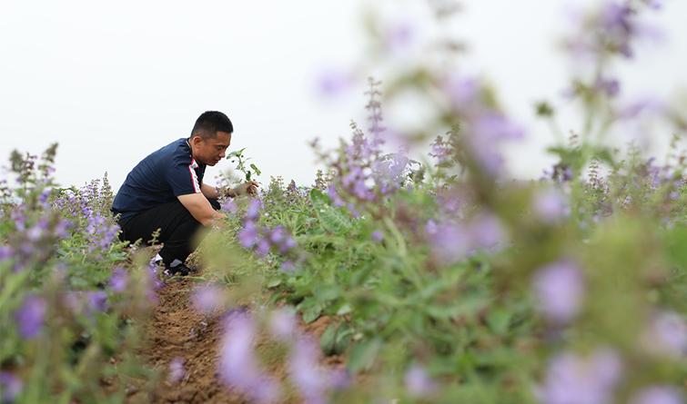 唐山丰润:特色农业助增收