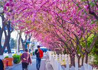 唐山:全城增绿 让绿色向幸福延伸