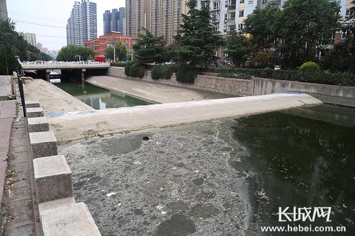 """石家庄民心河部分河段成了""""垃圾河"""""""