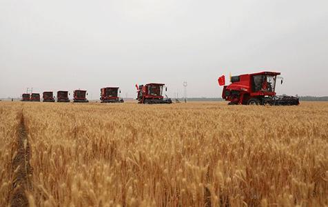 河北:麦收进度近7成 机收率达99.2%